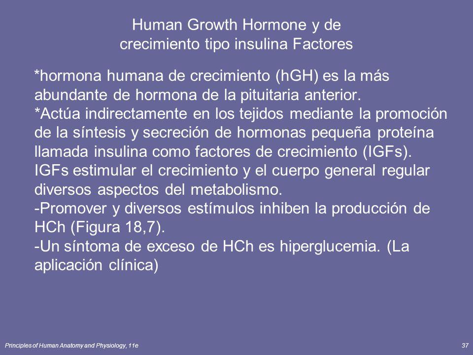 Principles of Human Anatomy and Physiology, 11e37 Human Growth Hormone y de crecimiento tipo insulina Factores *hormona humana de crecimiento (hGH) es