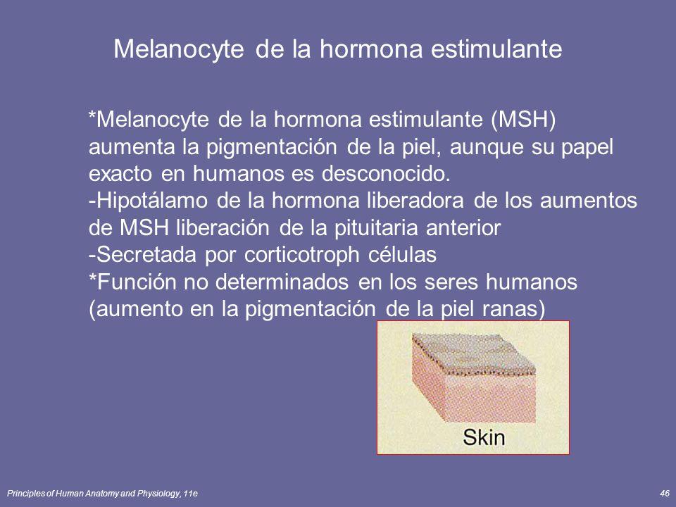 Principles of Human Anatomy and Physiology, 11e46 Melanocyte de la hormona estimulante *Melanocyte de la hormona estimulante (MSH) aumenta la pigmenta