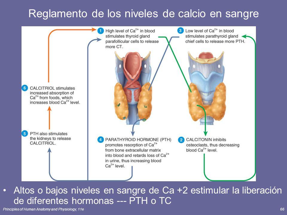 Principles of Human Anatomy and Physiology, 11e66 Reglamento de los niveles de calcio en sangre Altos o bajos niveles en sangre de Ca +2 estimular la