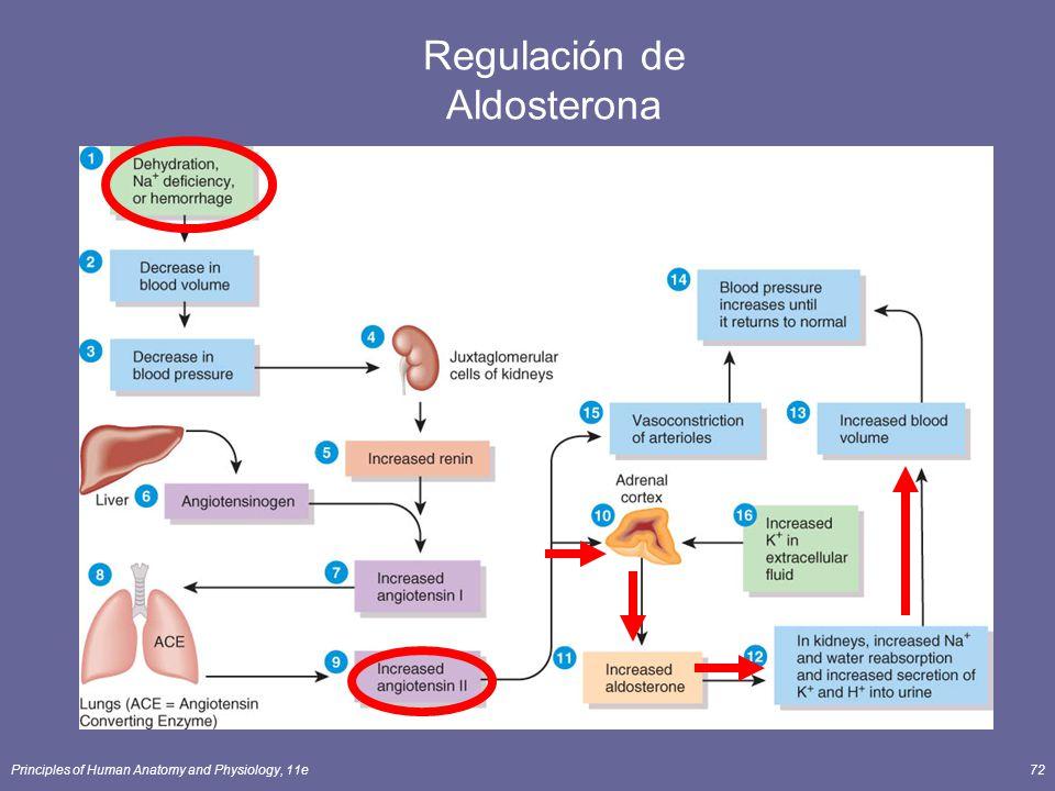 Principles of Human Anatomy and Physiology, 11e72 Regulación de Aldosterona