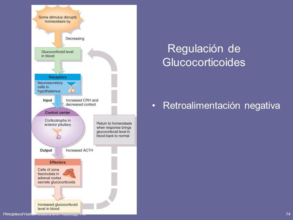 Principles of Human Anatomy and Physiology, 11e74 Regulación de Glucocorticoides Retroalimentación negativa