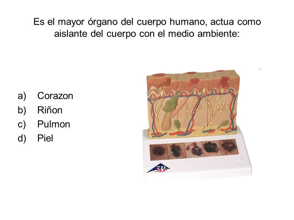 Es el mayor órgano del cuerpo humano, actua como aislante del cuerpo con el medio ambiente: a)Corazon b)Riñon c)Pulmon d)Piel