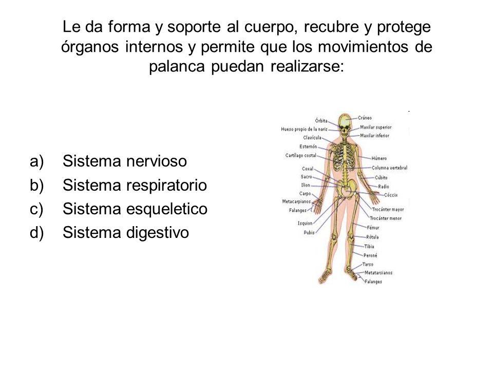 Le da forma y soporte al cuerpo, recubre y protege órganos internos y permite que los movimientos de palanca puedan realizarse: a)Sistema nervioso b)Sistema respiratorio c)Sistema esqueletico d)Sistema digestivo