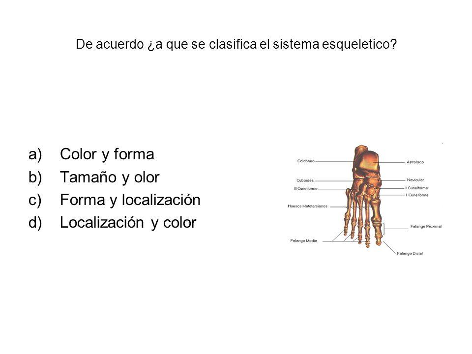 De acuerdo ¿a que se clasifica el sistema esqueletico? a)Color y forma b)Tamaño y olor c)Forma y localización d)Localización y color