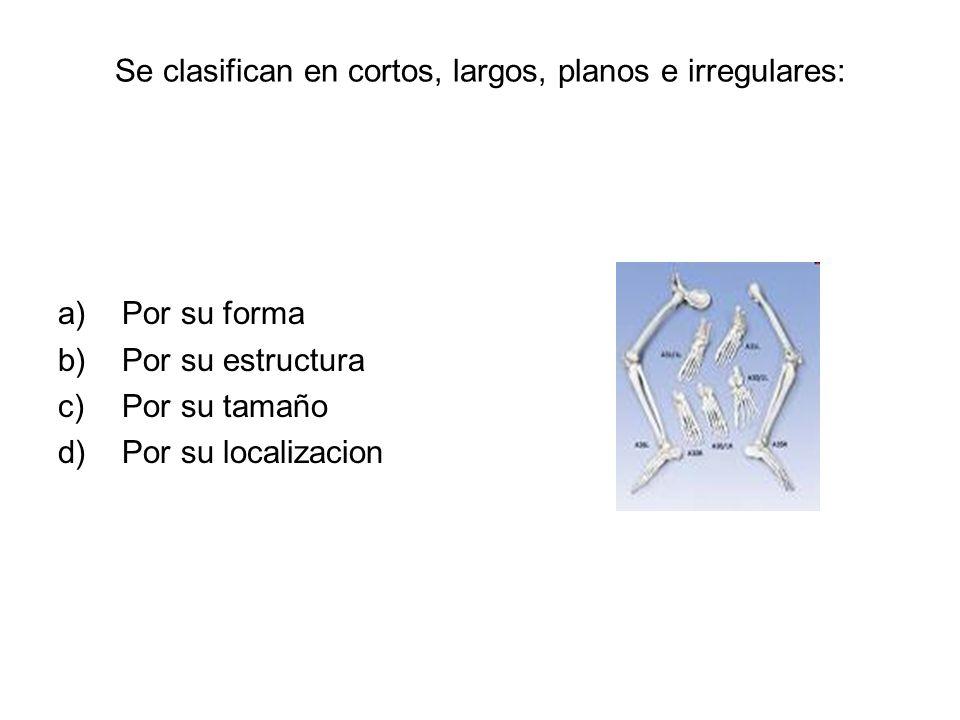 Se clasifican en cortos, largos, planos e irregulares: a)Por su forma b)Por su estructura c)Por su tamaño d)Por su localizacion