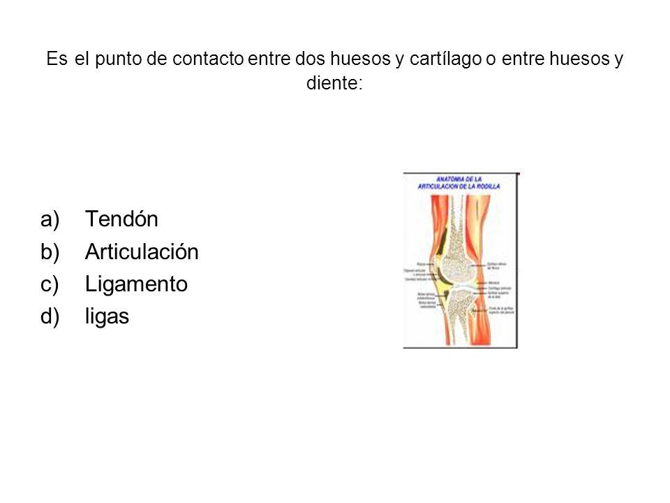 Es el punto de contacto entre dos huesos y cartílago o entre huesos y diente: a)Tendón b)Articulación c)Ligamento d)ligas