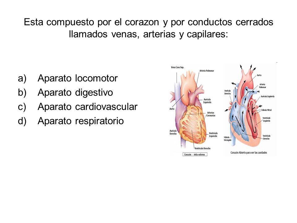 Esta compuesto por el corazon y por conductos cerrados llamados venas, arterias y capilares: a)Aparato locomotor b)Aparato digestivo c)Aparato cardiovascular d)Aparato respiratorio