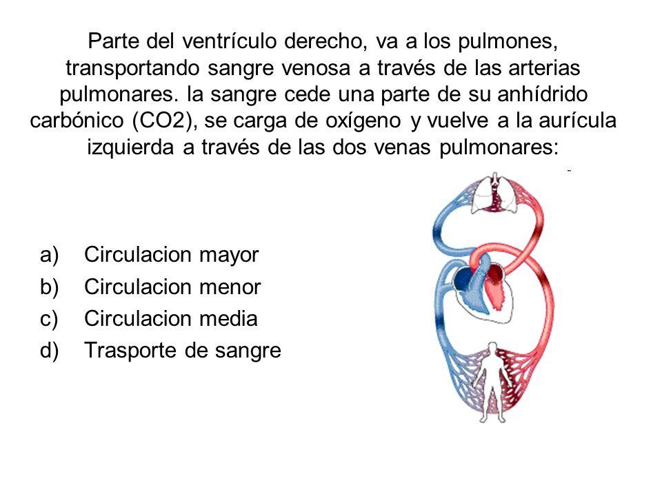 Parte del ventrículo derecho, va a los pulmones, transportando sangre venosa a través de las arterias pulmonares. la sangre cede una parte de su anhíd