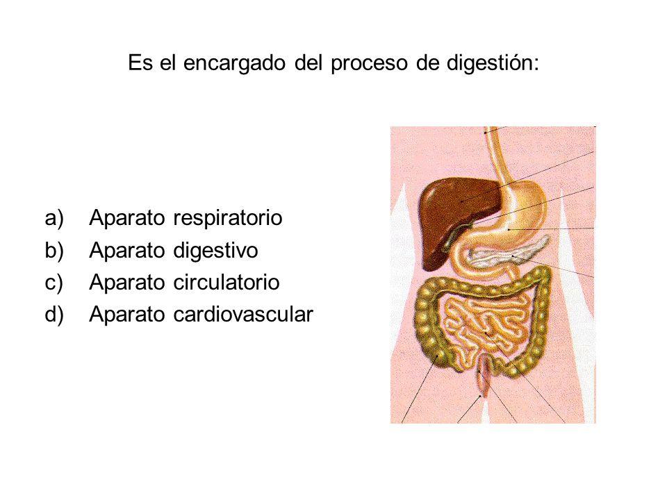 Es el encargado del proceso de digestión: a)Aparato respiratorio b)Aparato digestivo c)Aparato circulatorio d)Aparato cardiovascular