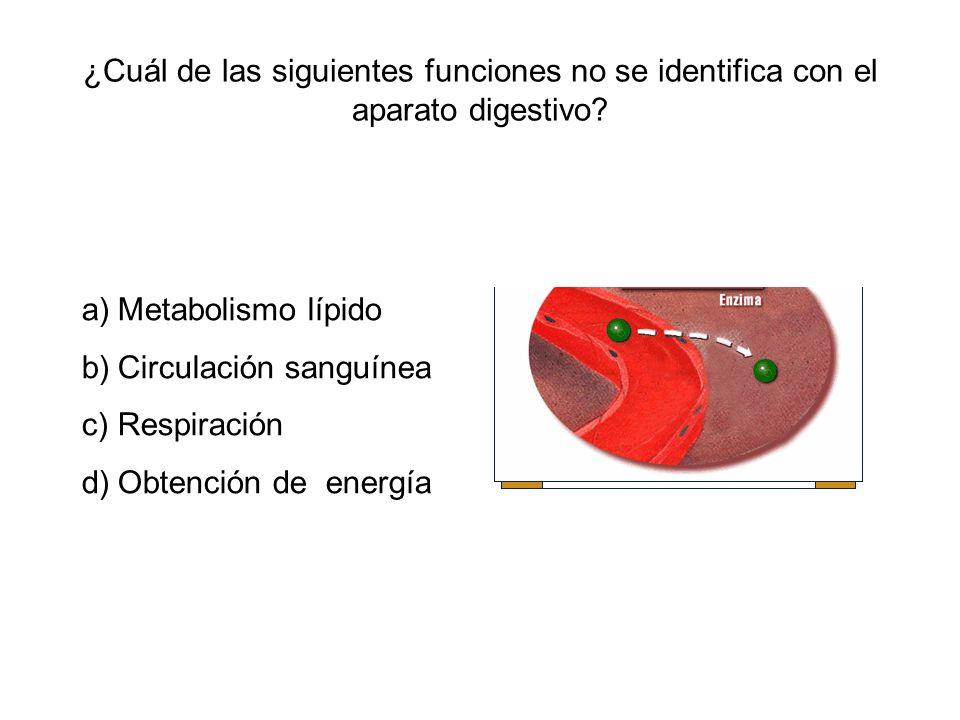 ¿Cuál de las siguientes funciones no se identifica con el aparato digestivo? a)Metabolismo lípido b)Circulación sanguínea c)Respiración d)Obtención de