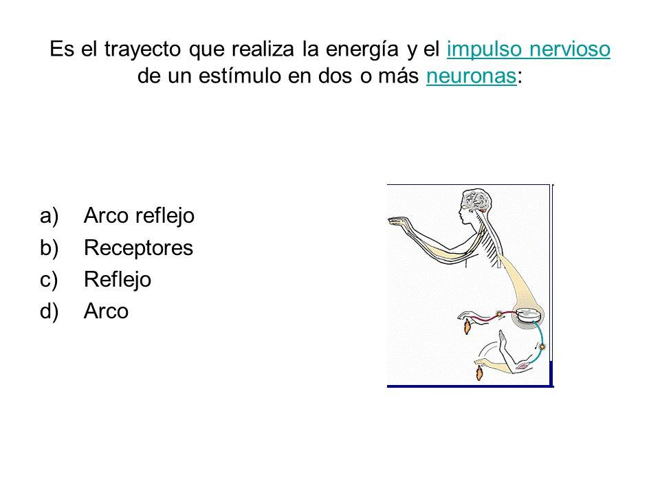 Es el trayecto que realiza la energía y el impulso nervioso de un estímulo en dos o más neuronas:impulso nerviosoneuronas a)Arco reflejo b)Receptores