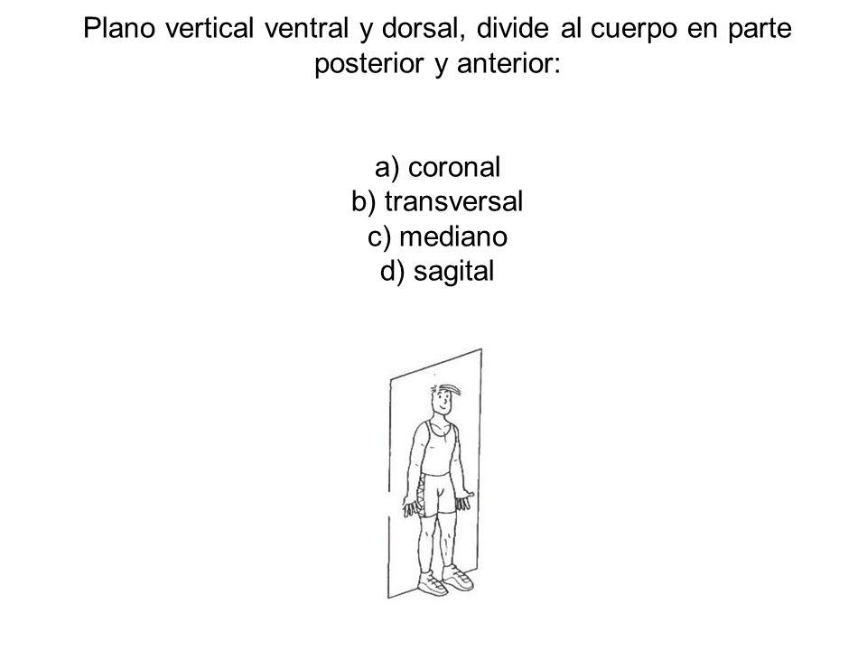 Plano vertical ventral y dorsal, divide al cuerpo en parte posterior y anterior: a) coronal b) transversal c) mediano d) sagital