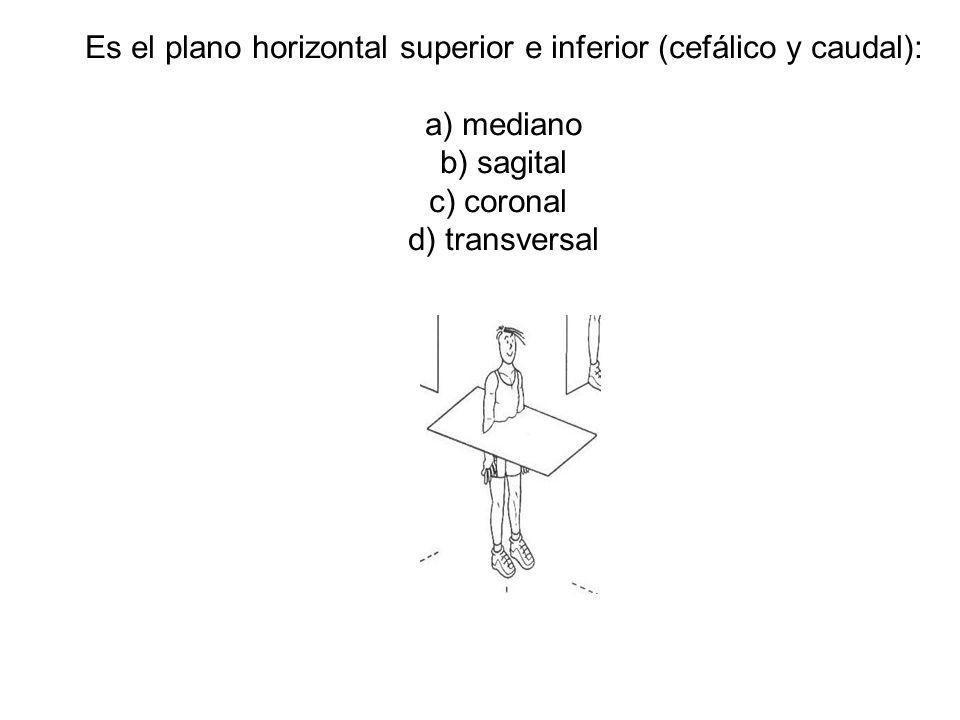 Es el plano horizontal superior e inferior (cefálico y caudal): a) mediano b) sagital c) coronal d) transversal
