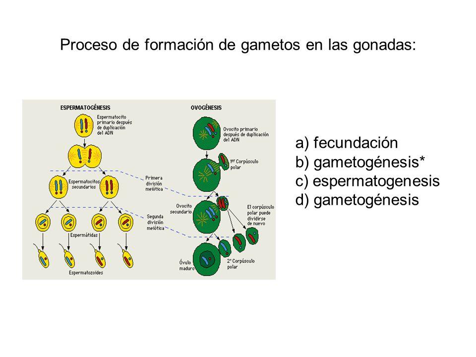 Proceso de formación de gametos en las gonadas: a) fecundación b) gametogénesis* c) espermatogenesis d) gametogénesis