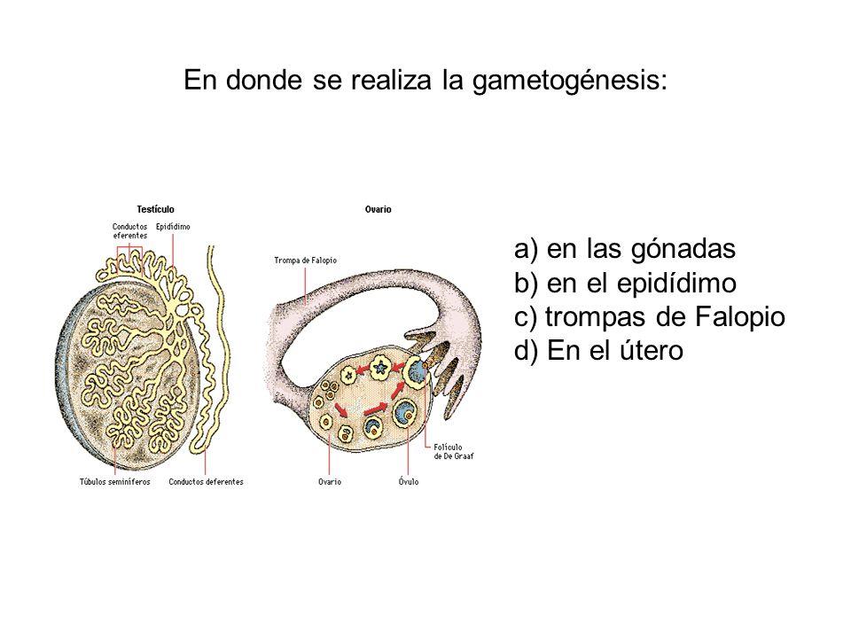 En donde se realiza la gametogénesis: a) en las gónadas b) en el epidídimo c) trompas de Falopio d) En el útero