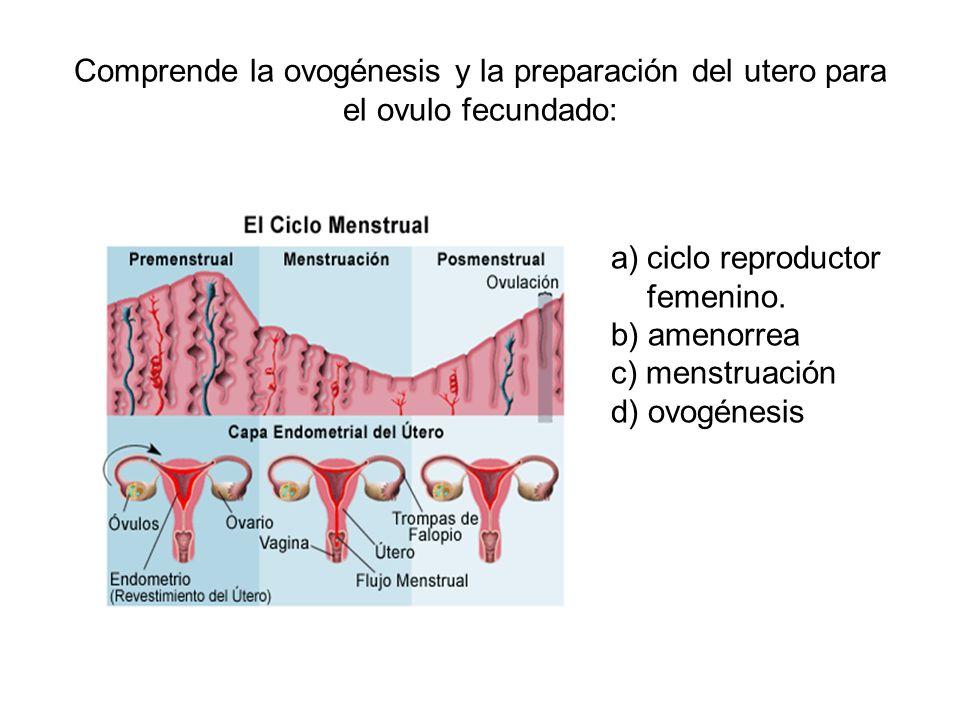 Comprende la ovogénesis y la preparación del utero para el ovulo fecundado: a)ciclo reproductor femenino. b) amenorrea c) menstruación d) ovogénesis
