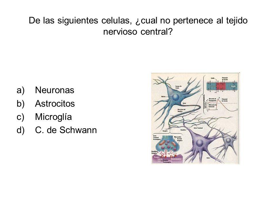 De las siguientes celulas, ¿cual no pertenece al tejido nervioso central? a)Neuronas b)Astrocitos c)Microglía d)C. de Schwann