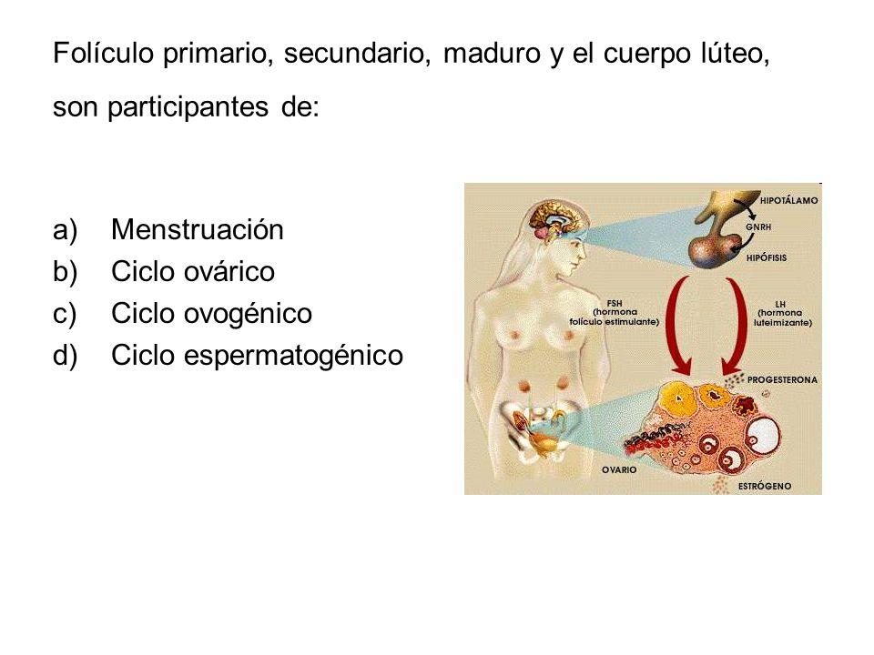 Folículo primario, secundario, maduro y el cuerpo lúteo, son participantes de: a)Menstruación b)Ciclo ovárico c)Ciclo ovogénico d)Ciclo espermatogénic