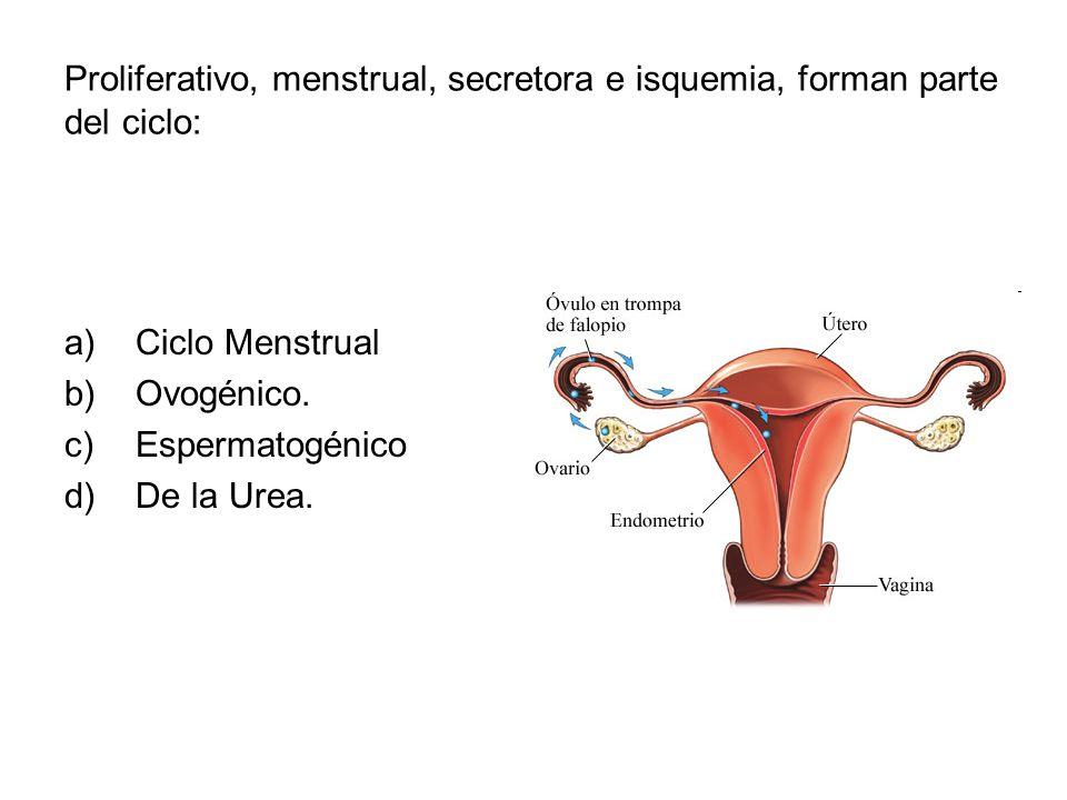 Proliferativo, menstrual, secretora e isquemia, forman parte del ciclo: a)Ciclo Menstrual b)Ovogénico. c)Espermatogénico d)De la Urea.
