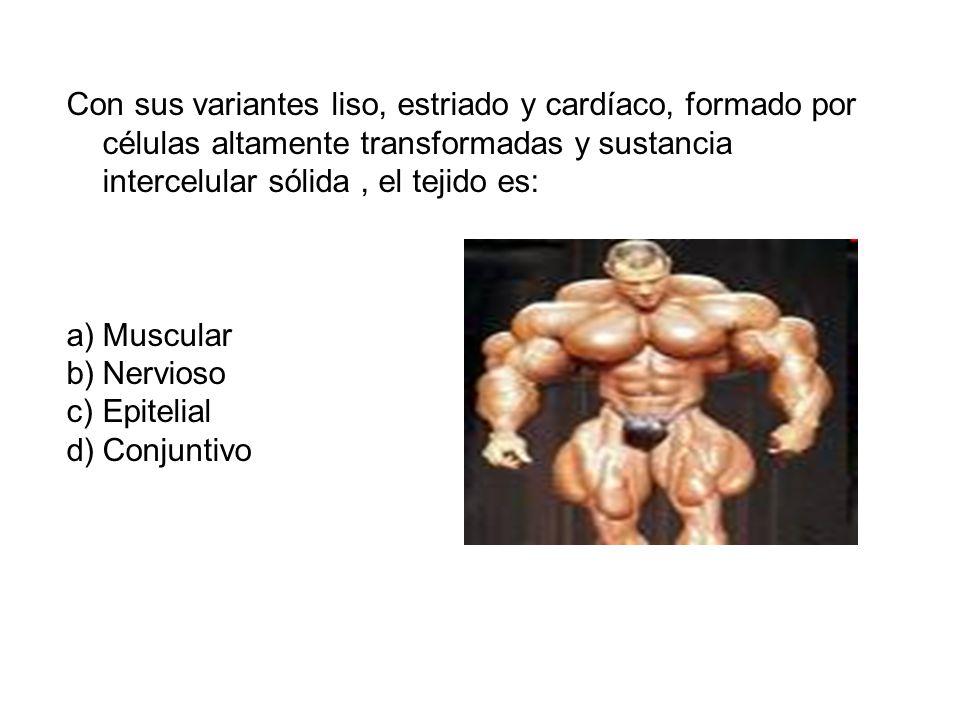 Con sus variantes liso, estriado y cardíaco, formado por células altamente transformadas y sustancia intercelular sólida, el tejido es: a)Muscular b)Nervioso c)Epitelial d)Conjuntivo