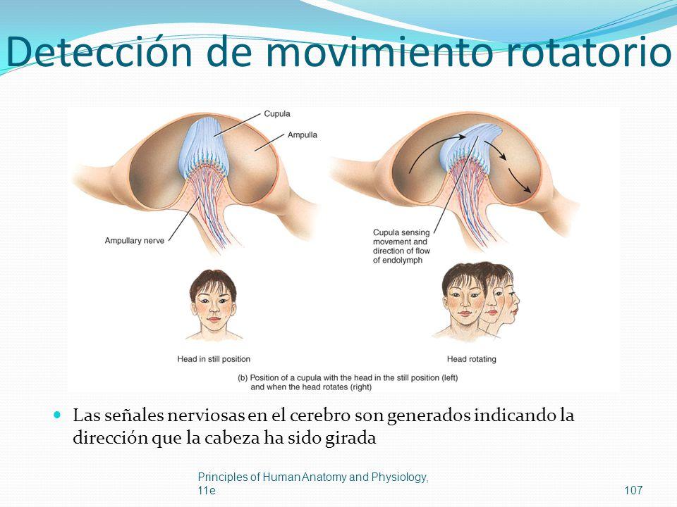 Detección de movimiento rotatorio Las señales nerviosas en el cerebro son generados indicando la dirección que la cabeza ha sido girada Principles of