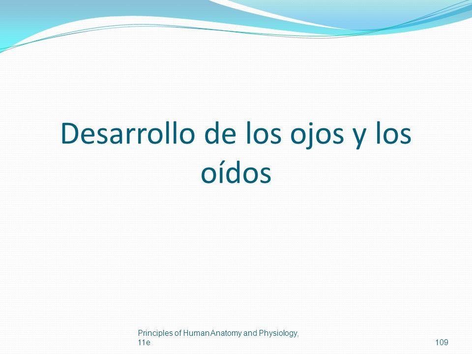 Desarrollo de los ojos y los oídos Principles of Human Anatomy and Physiology, 11e109