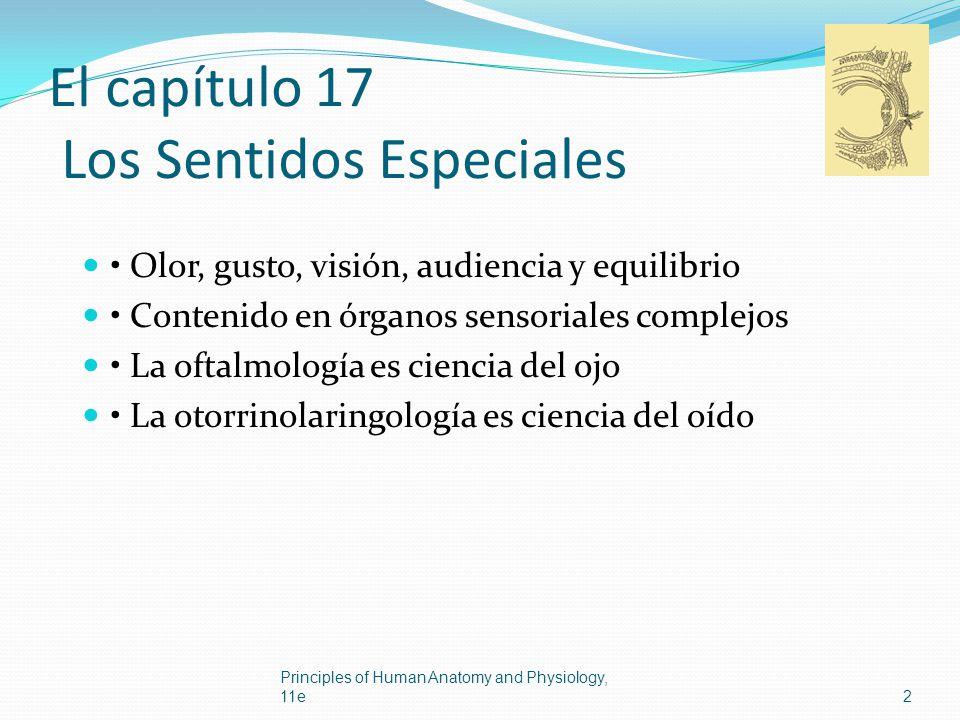 El capítulo 17 Los Sentidos Especiales Olor, gusto, visión, audiencia y equilibrio Contenido en órganos sensoriales complejos La oftalmología es cienc
