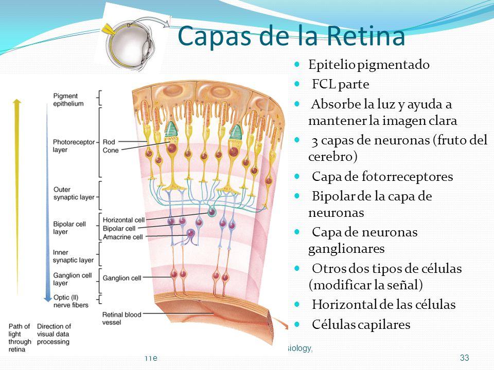 Capas de la Retina Epitelio pigmentado FCL parte Absorbe la luz y ayuda a mantener la imagen clara 3 capas de neuronas (fruto del cerebro) Capa de fot