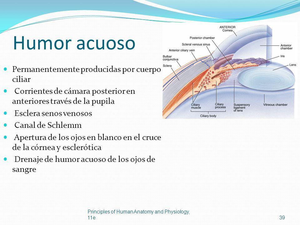 Humor acuoso Permanentemente producidas por cuerpo ciliar Corrientes de cámara posterior en anteriores través de la pupila Esclera senos venosos Canal
