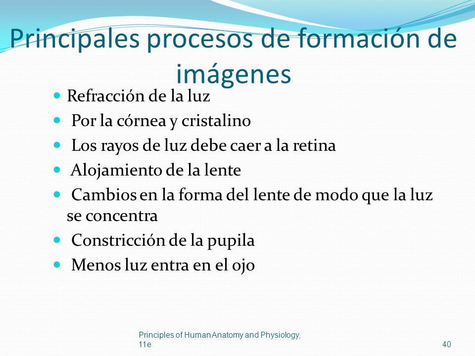 Principales procesos de formación de imágenes Refracción de la luz Por la córnea y cristalino Los rayos de luz debe caer a la retina Alojamiento de la