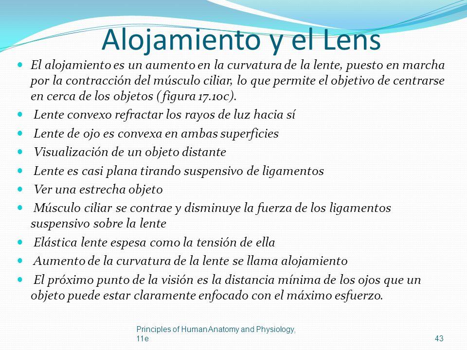 Alojamiento y el Lens El alojamiento es un aumento en la curvatura de la lente, puesto en marcha por la contracción del músculo ciliar, lo que permite