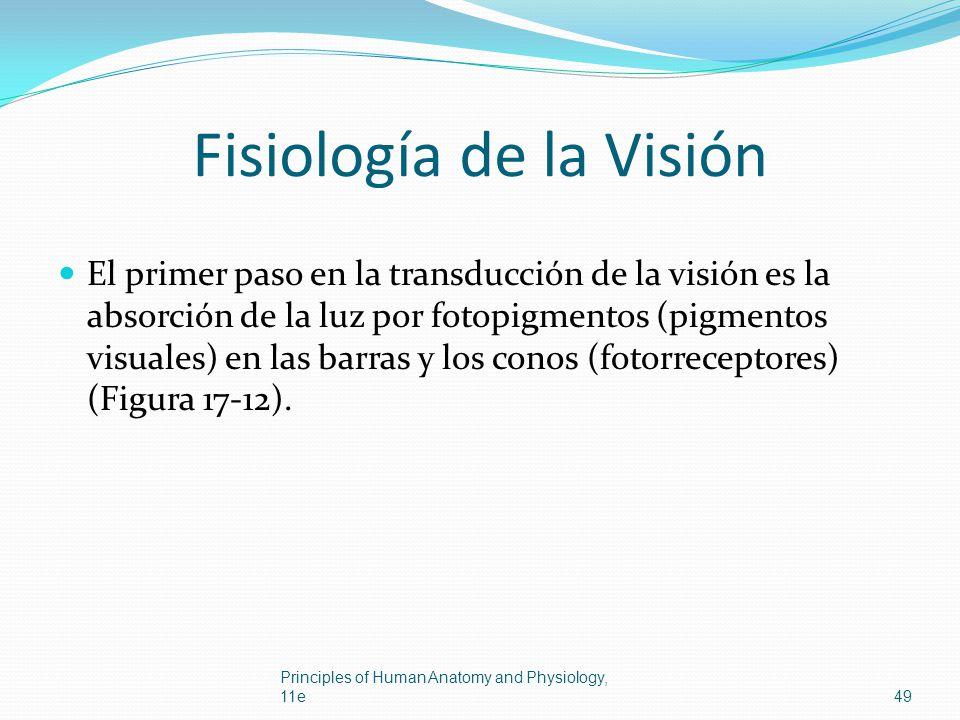 Fisiología de la Visión El primer paso en la transducción de la visión es la absorción de la luz por fotopigmentos (pigmentos visuales) en las barras