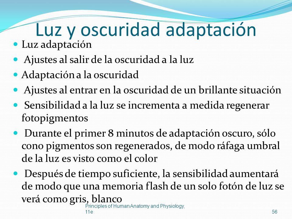 Luz y oscuridad adaptación Luz adaptación Ajustes al salir de la oscuridad a la luz Adaptación a la oscuridad Ajustes al entrar en la oscuridad de un