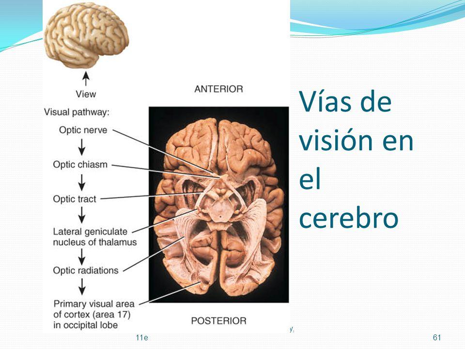 Vías de visión en el cerebro Principles of Human Anatomy and Physiology, 11e61