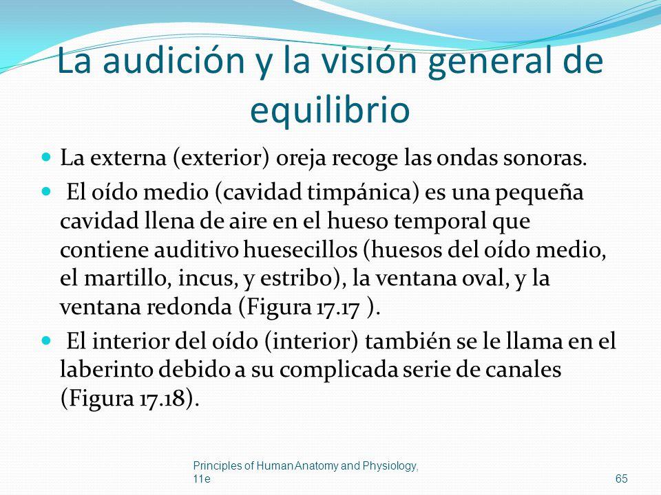 La audición y la visión general de equilibrio La externa (exterior) oreja recoge las ondas sonoras. El oído medio (cavidad timpánica) es una pequeña c