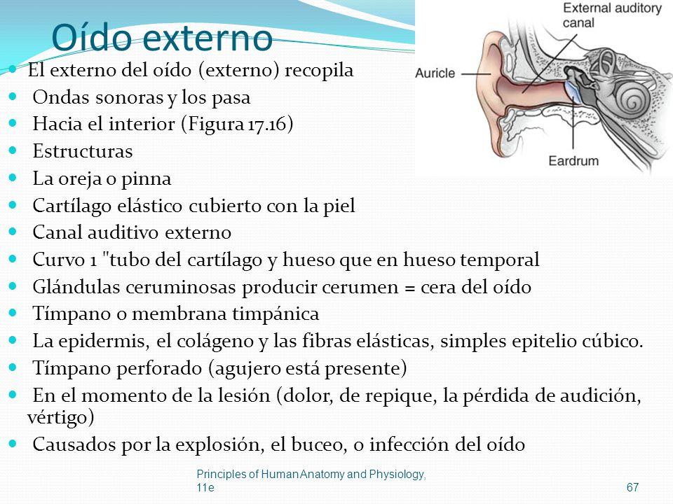 Oído externo El externo del oído (externo) recopila Ondas sonoras y los pasa Hacia el interior (Figura 17.16) Estructuras La oreja o pinna Cartílago e