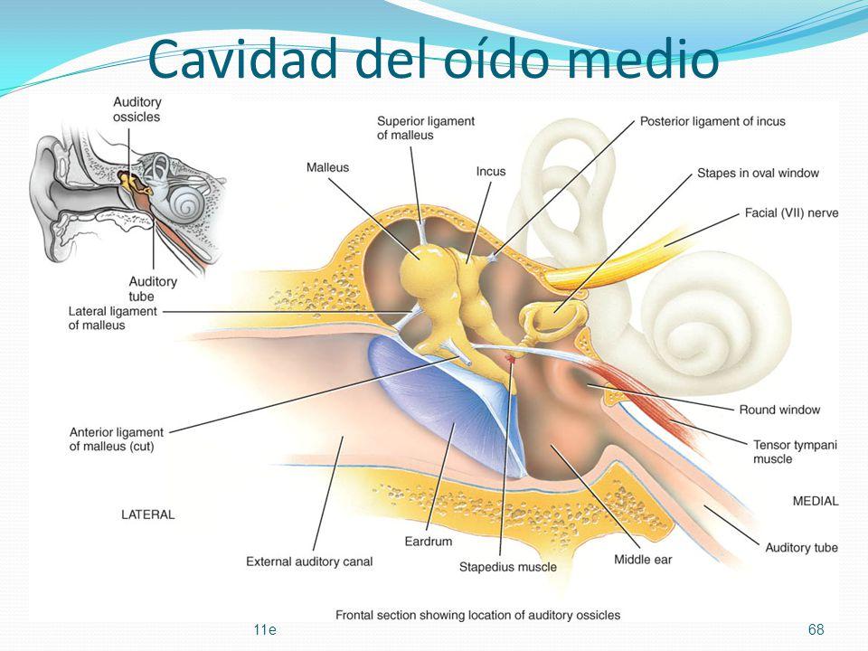 Cavidad del oído medio Principles of Human Anatomy and Physiology, 11e68