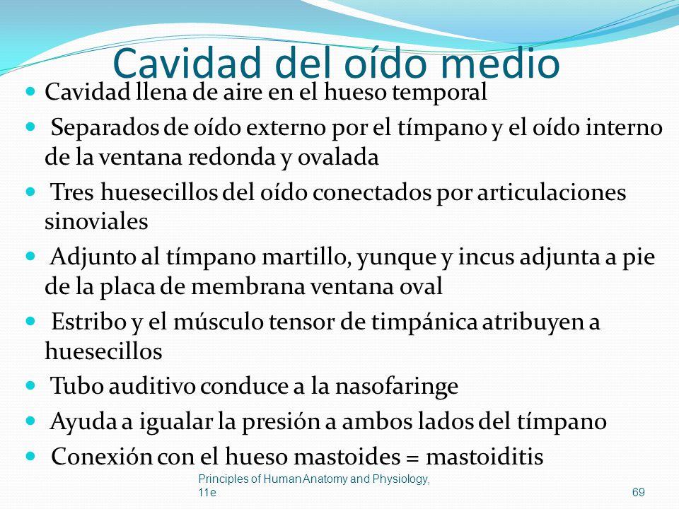 Cavidad del oído medio Cavidad llena de aire en el hueso temporal Separados de oído externo por el tímpano y el oído interno de la ventana redonda y o