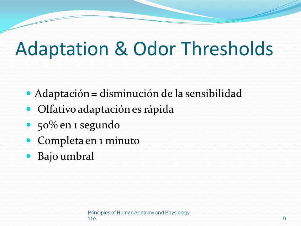 Adaptation & Odor Thresholds Adaptación = disminución de la sensibilidad Olfativo adaptación es rápida 50% en 1 segundo Completa en 1 minuto Bajo umbr