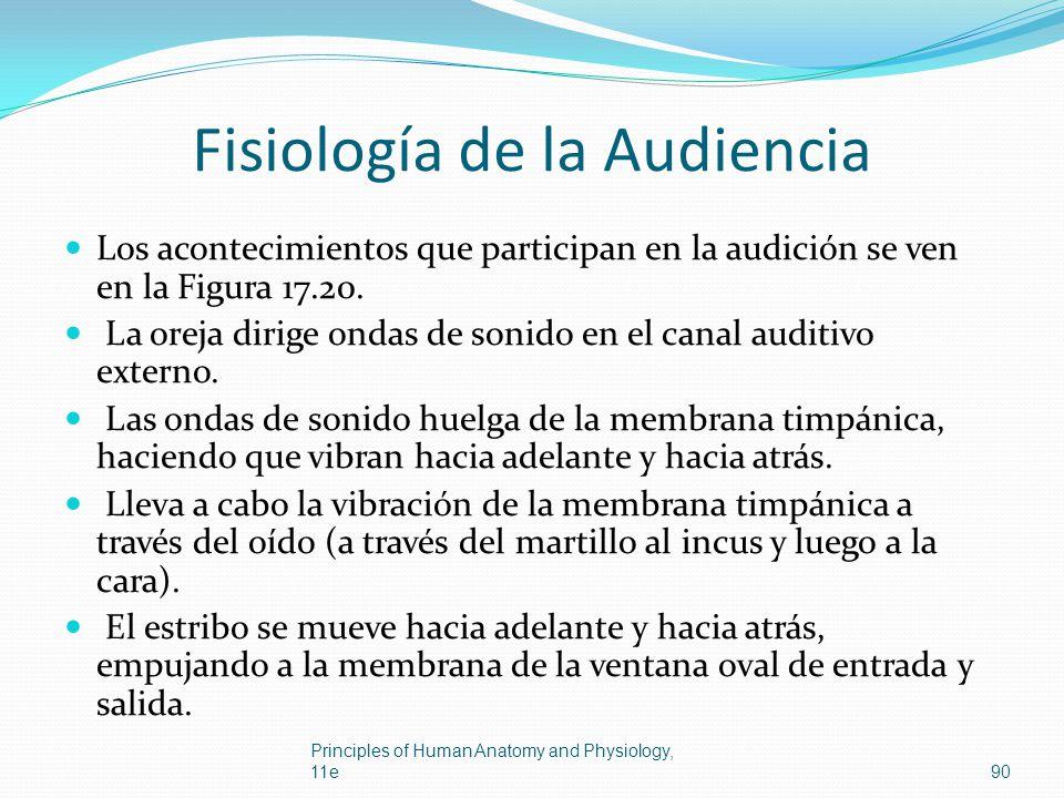 Fisiología de la Audiencia Los acontecimientos que participan en la audición se ven en la Figura 17.20. La oreja dirige ondas de sonido en el canal au