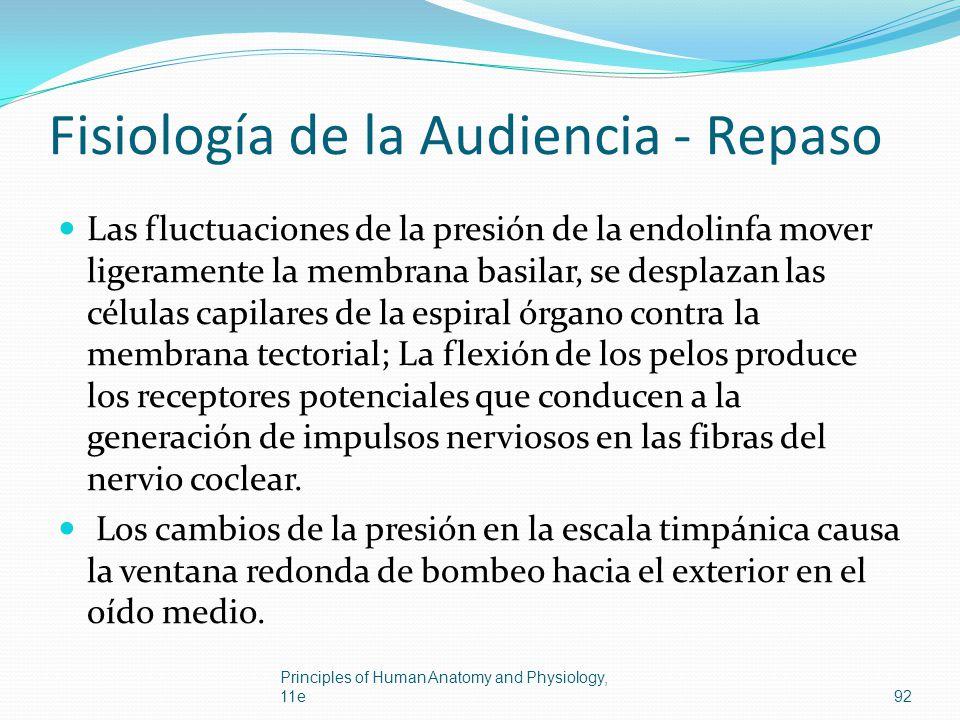 Fisiología de la Audiencia - Repaso Las fluctuaciones de la presión de la endolinfa mover ligeramente la membrana basilar, se desplazan las células ca