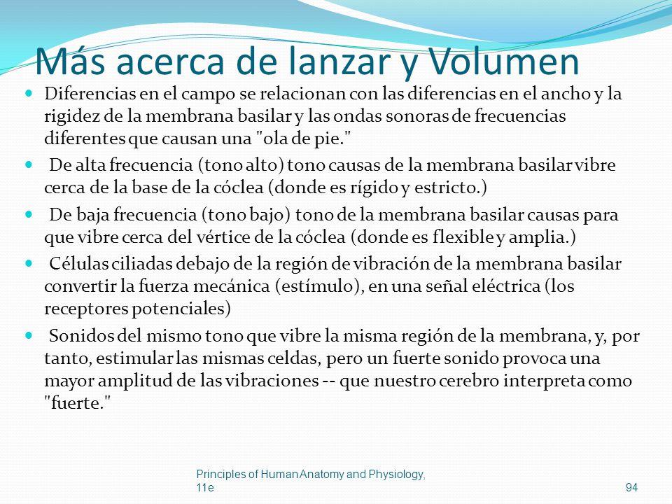Más acerca de lanzar y Volumen Diferencias en el campo se relacionan con las diferencias en el ancho y la rigidez de la membrana basilar y las ondas s
