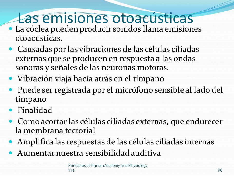 Las emisiones otoacústicas La cóclea pueden producir sonidos llama emisiones otoacústicas. Causadas por las vibraciones de las células ciliadas extern