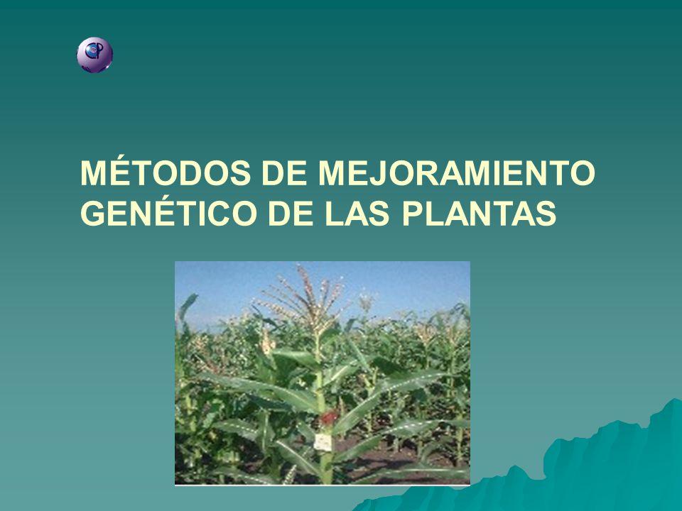 MÉTODOS DE MEJORAMIENTO GENÉTICO DE LAS PLANTAS