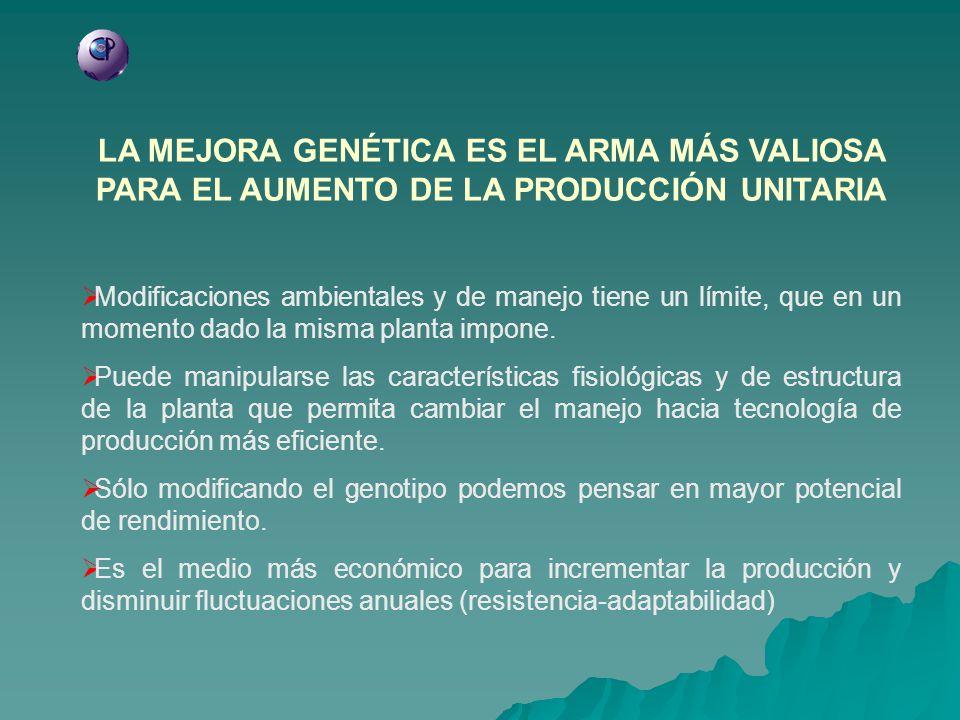 LA MEJORA GENÉTICA ES EL ARMA MÁS VALIOSA PARA EL AUMENTO DE LA PRODUCCIÓN UNITARIA Modificaciones ambientales y de manejo tiene un límite, que en un