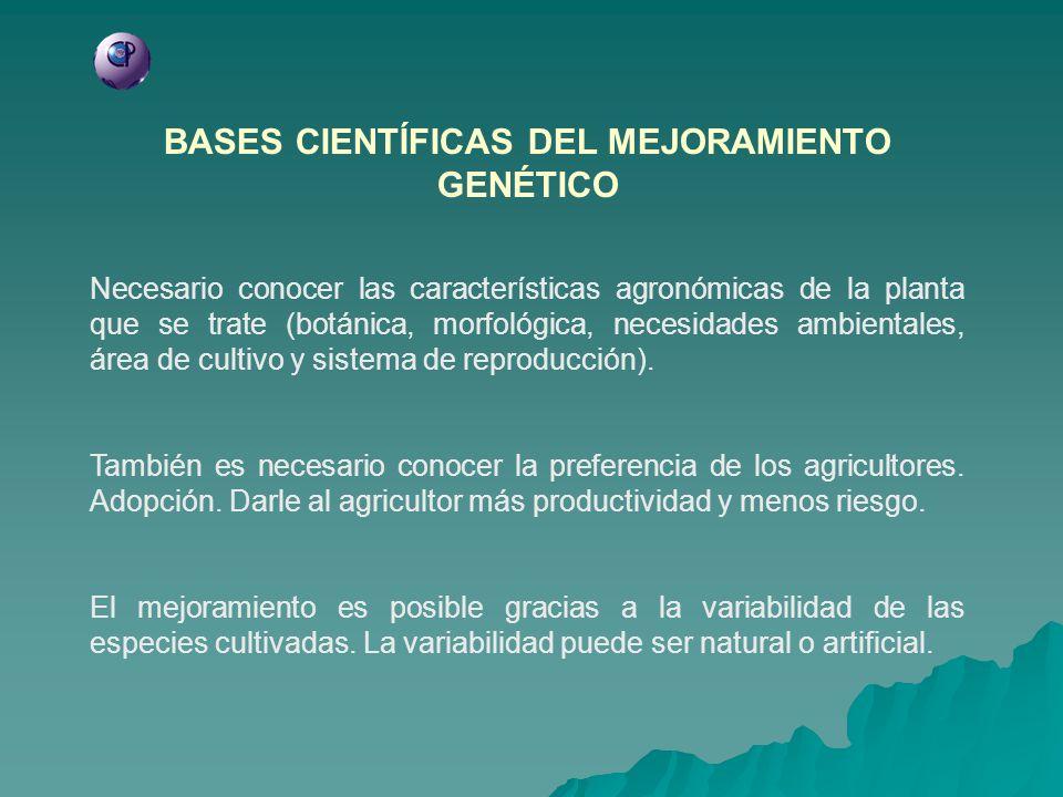 BASES CIENTÍFICAS DEL MEJORAMIENTO GENÉTICO Necesario conocer las características agronómicas de la planta que se trate (botánica, morfológica, necesi