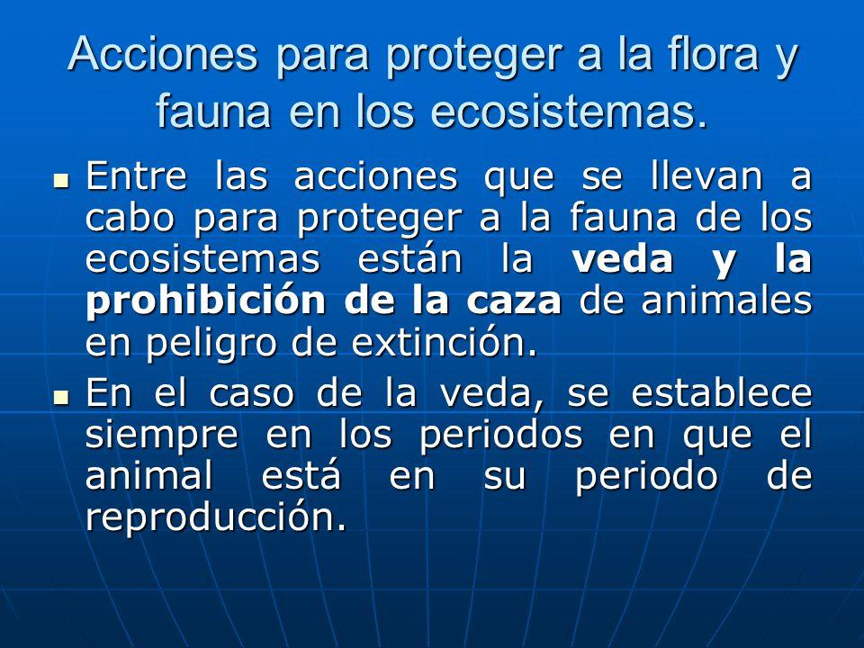 Acciones para proteger a la flora y fauna en los ecosistemas. Entre las acciones que se llevan a cabo para proteger a la fauna de los ecosistemas está