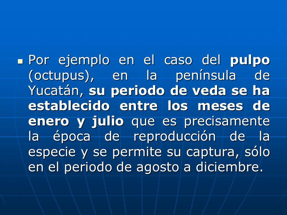 Por ejemplo en el caso del pulpo (octupus), en la península de Yucatán, su periodo de veda se ha establecido entre los meses de enero y julio que es p