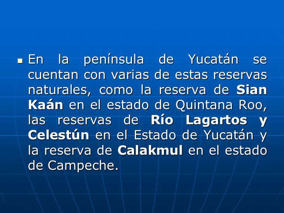 En la península de Yucatán se cuentan con varias de estas reservas naturales, como la reserva de Sian Kaán en el estado de Quintana Roo, las reservas