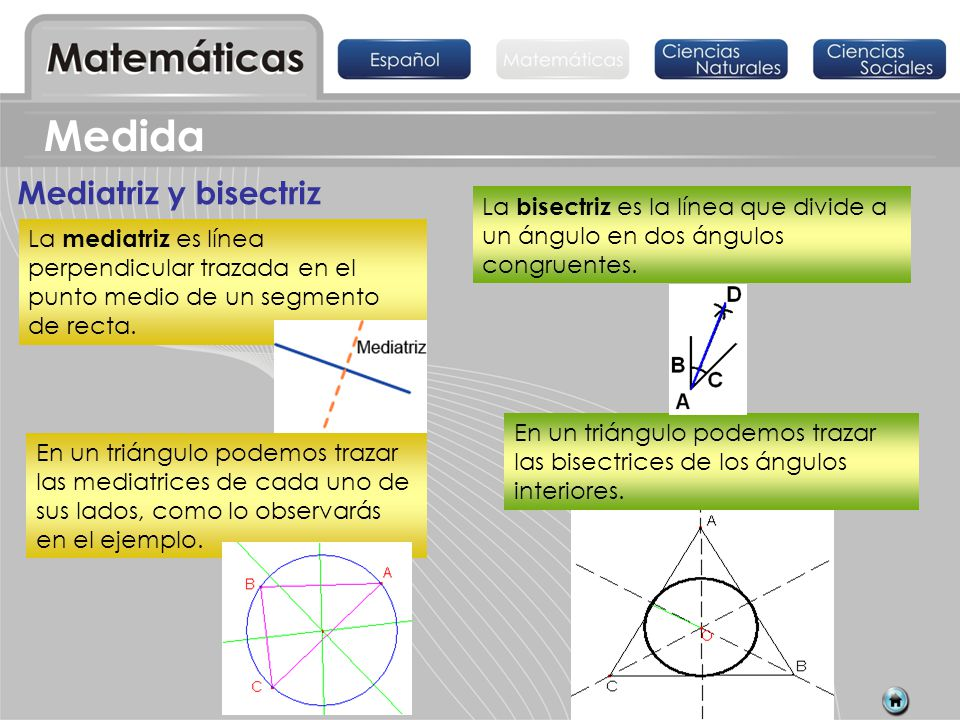 Mediatriz y bisectriz La mediatriz es línea perpendicular trazada en el punto medio de un segmento de recta. La bisectriz es la línea que divide a un